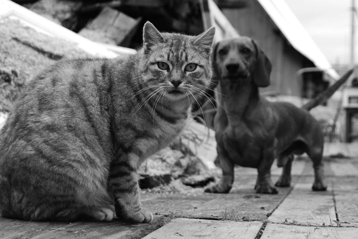 Cat and Dog Bites - familydoctor org