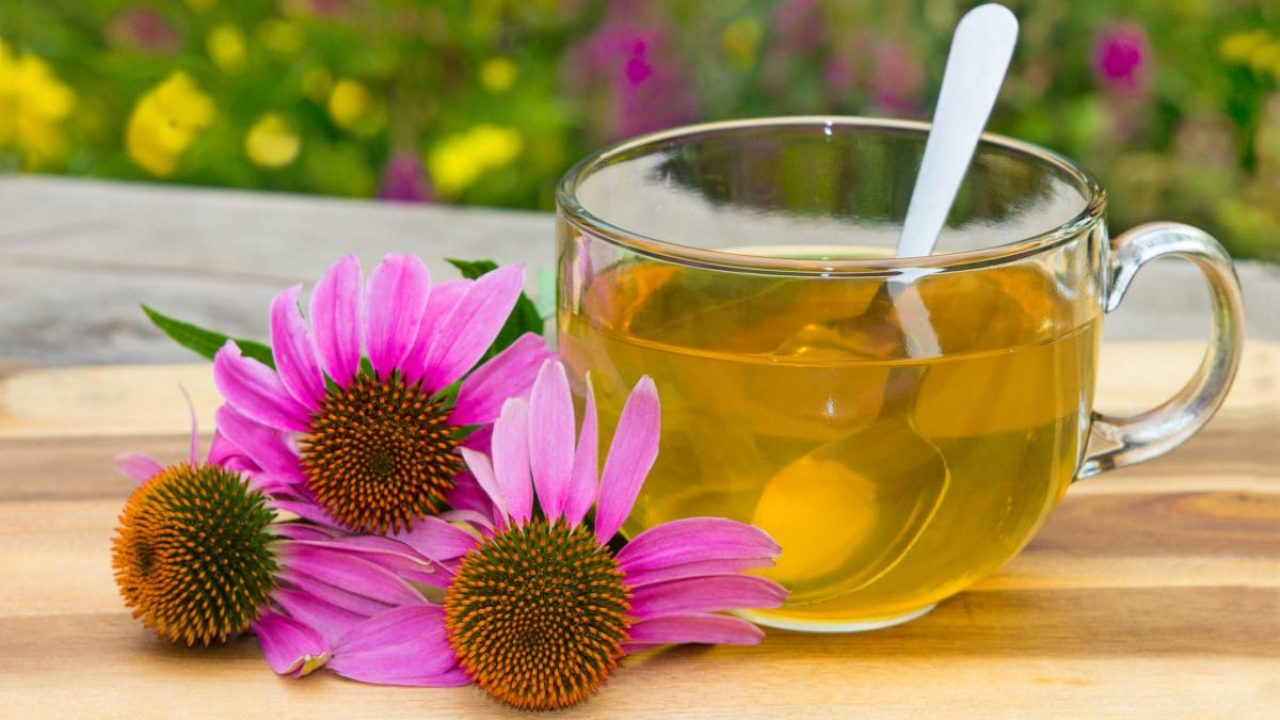Echinacea: What Should I Know About It? - familydoctor org