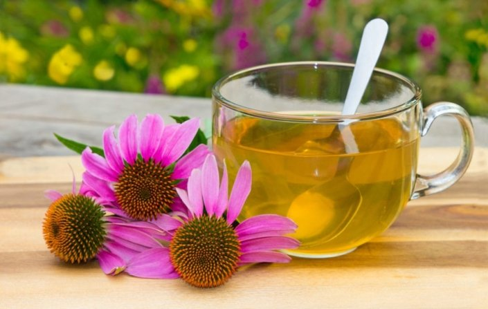 Image result for Take Echinacea
