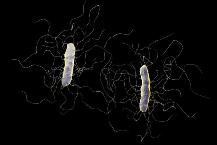 clostridium difficile bacterium isolated on black background