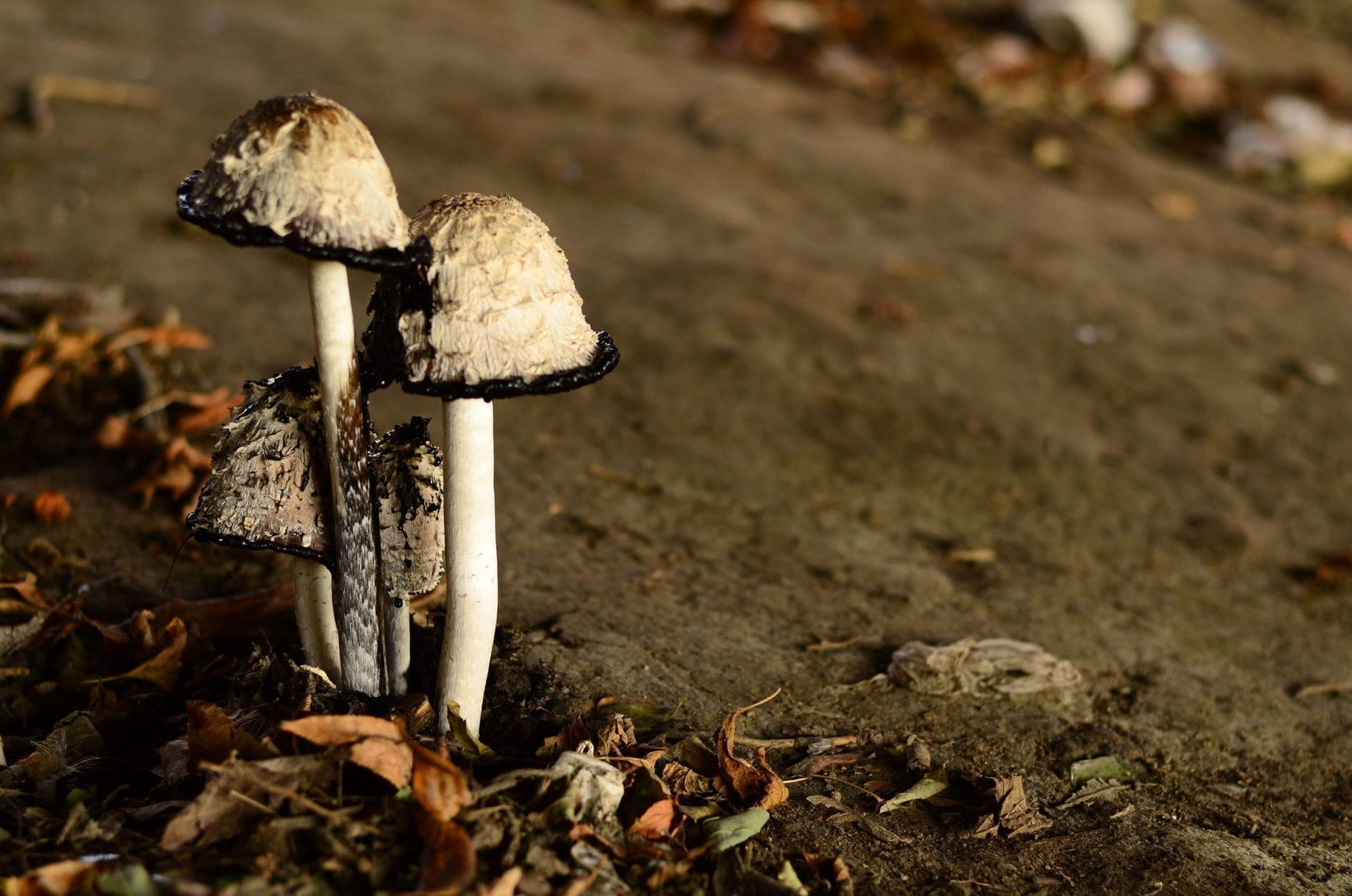 Food Poisoning | Mushroom Poisoning - familydoctor org